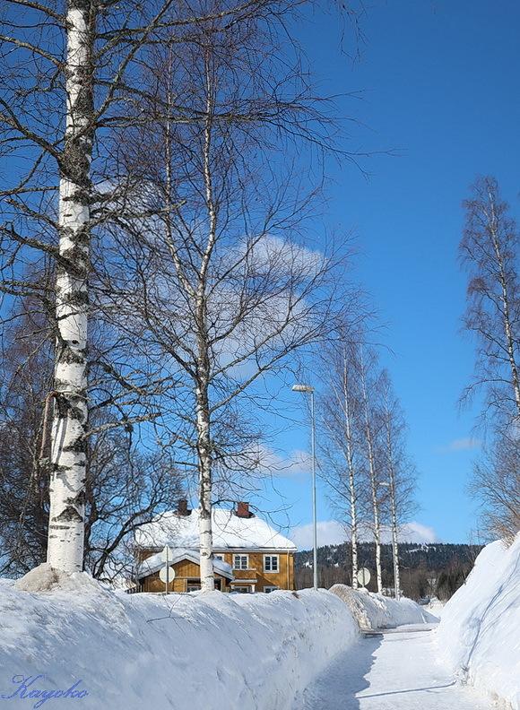 散歩 と 雪かき_a0353839_05251456.jpg