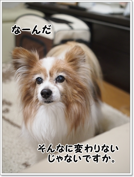 d0013149_00421833.jpg
