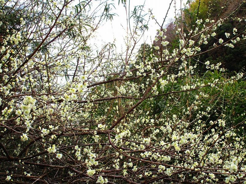 日常「春の陽気」_b0362459_22221292.jpg