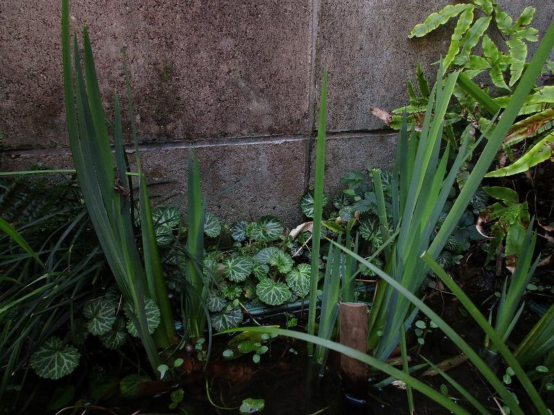 日常「春の陽気」_b0362459_22442591.jpg