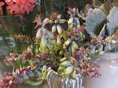 オークリーフ(お花でいっぱいです)_f0049672_10263840.jpg