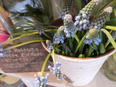 オークリーフ(お花でいっぱいです)_f0049672_10272031.jpg