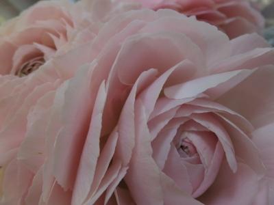オークリーフ(お花でいっぱいです)_f0049672_10282226.jpg