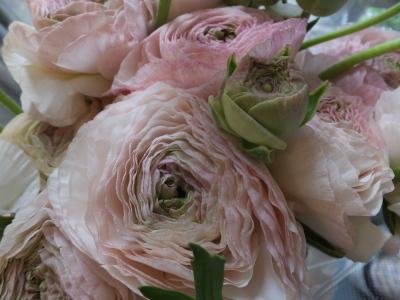 オークリーフ(お花でいっぱいです)_f0049672_10283678.jpg
