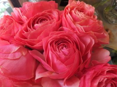 オークリーフ(お花でいっぱいです)_f0049672_10292545.jpg