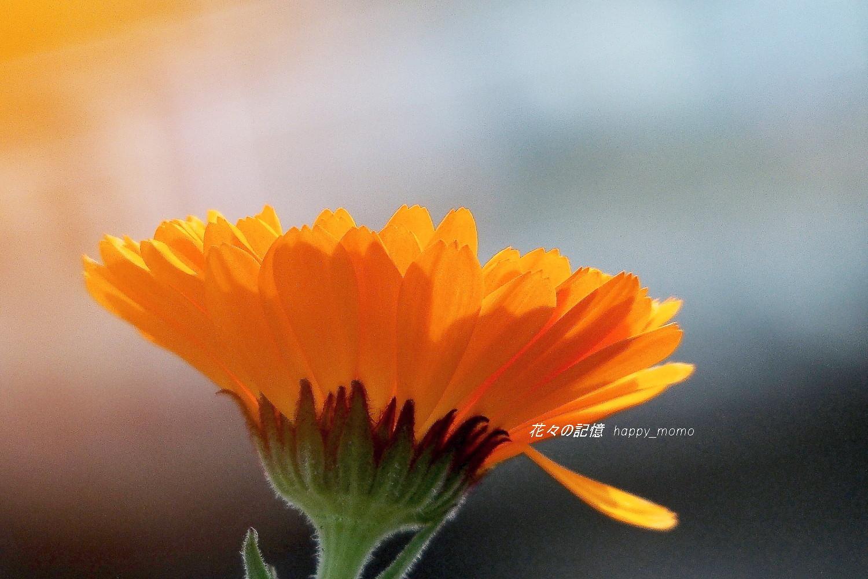 待ち焦がれた「開花」サクラ(^-^)_c0357781_21091700.jpg