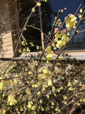 春のお彼岸_f0073301_17033581.jpg