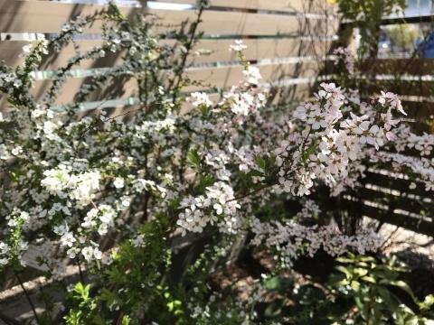 春のお彼岸_f0073301_17034979.jpg