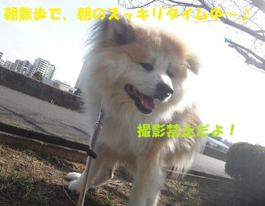 f0121712_17050362.jpg