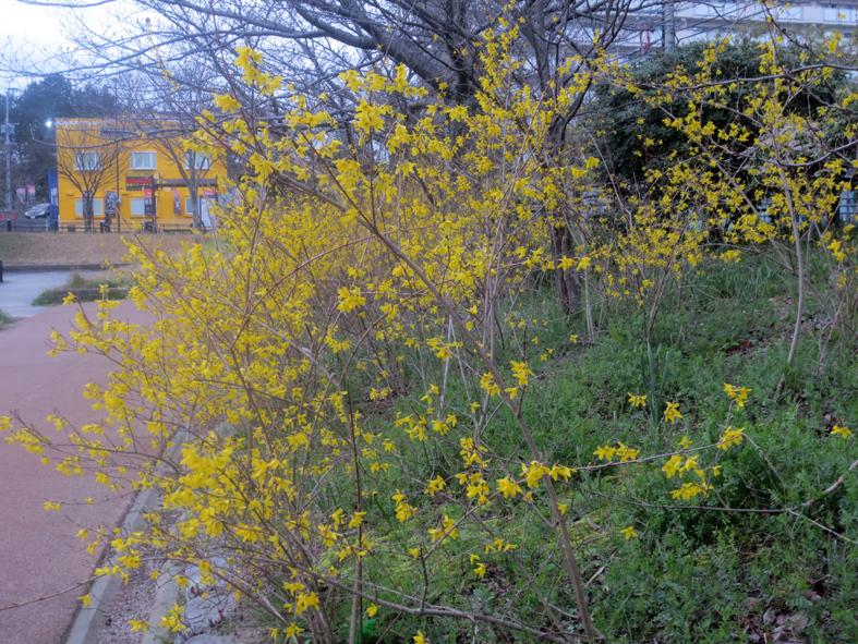 ■小さな春たち 2──週替わりの夕暮れ[3/18]_d0190217_21485531.jpg