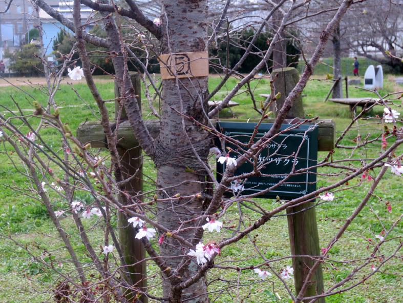 ■小さな春たち 2──週替わりの夕暮れ[3/18]_d0190217_21500046.jpg