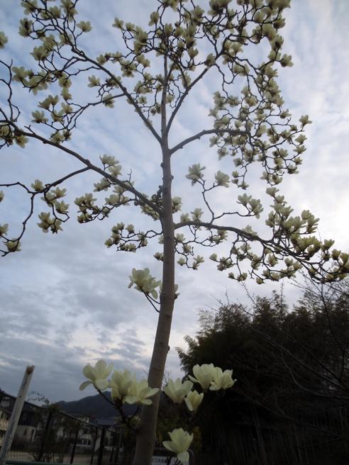 ■小さな春たち 2──週替わりの夕暮れ[3/18]_d0190217_21501855.jpg