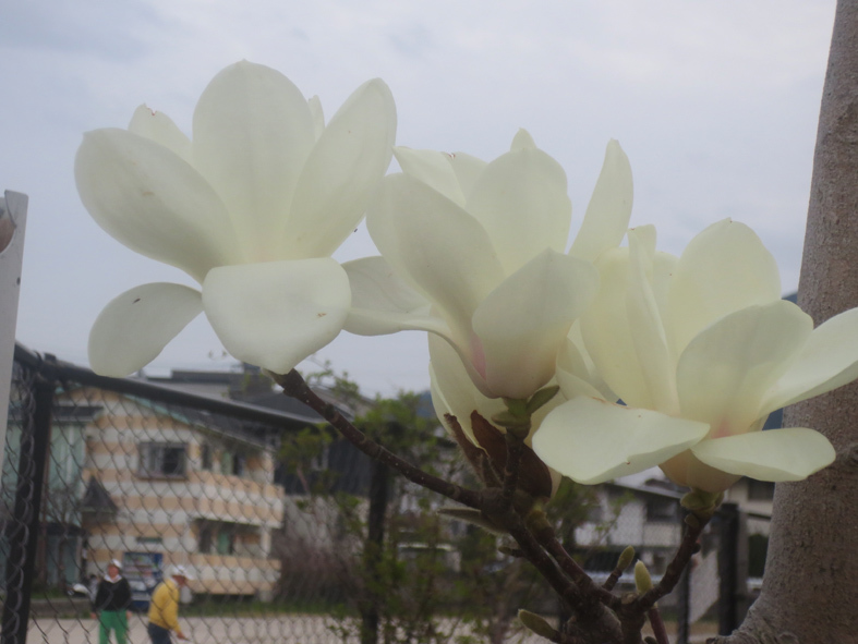■小さな春たち 2──週替わりの夕暮れ[3/18]_d0190217_21505403.jpg