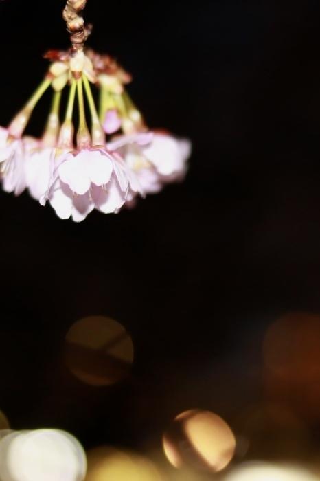 【西方寺】_f0348831_08123380.jpg