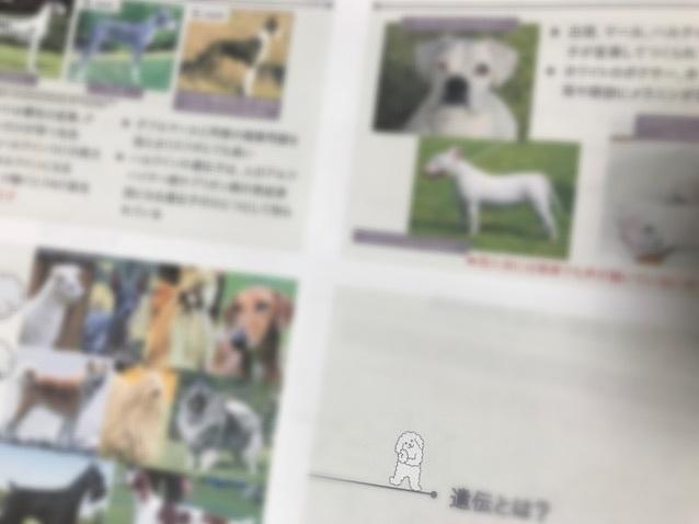 災害時&犬の遺伝セミナーレポート(その2)_c0099133_20031555.jpg