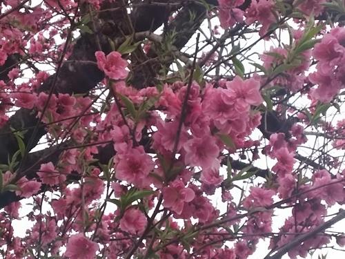 春の訪れ_c0076939_18005496.jpg