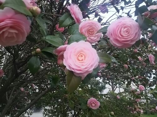 春の訪れ_c0076939_18005919.jpg