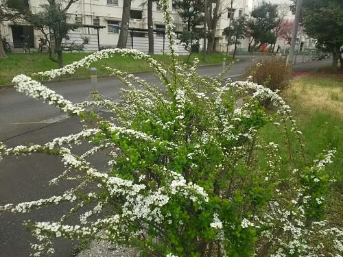 春の訪れ_c0076939_18010566.jpg