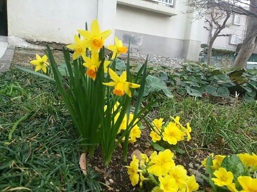 春の訪れ_c0076939_18011122.jpg