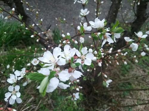 春の訪れ_c0076939_18011461.jpg