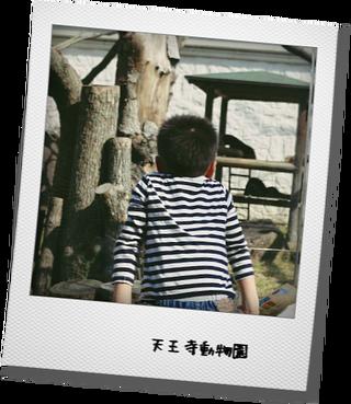 天王寺動物園とカヌレとパン屋_e0214646_23104580.png