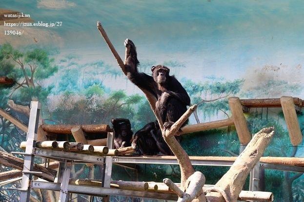 天王寺動物園とカヌレとパン屋_e0214646_23120779.jpg
