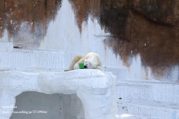 天王寺動物園とカヌレとパン屋_e0214646_23400294.jpg