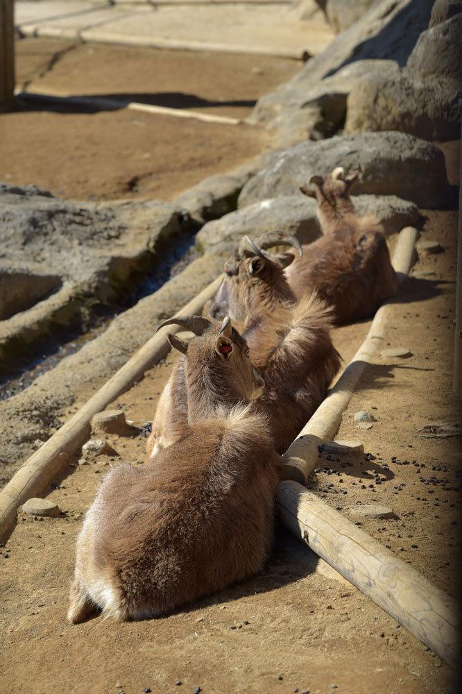 多摩動物園散歩_b0023856_07475761.jpg