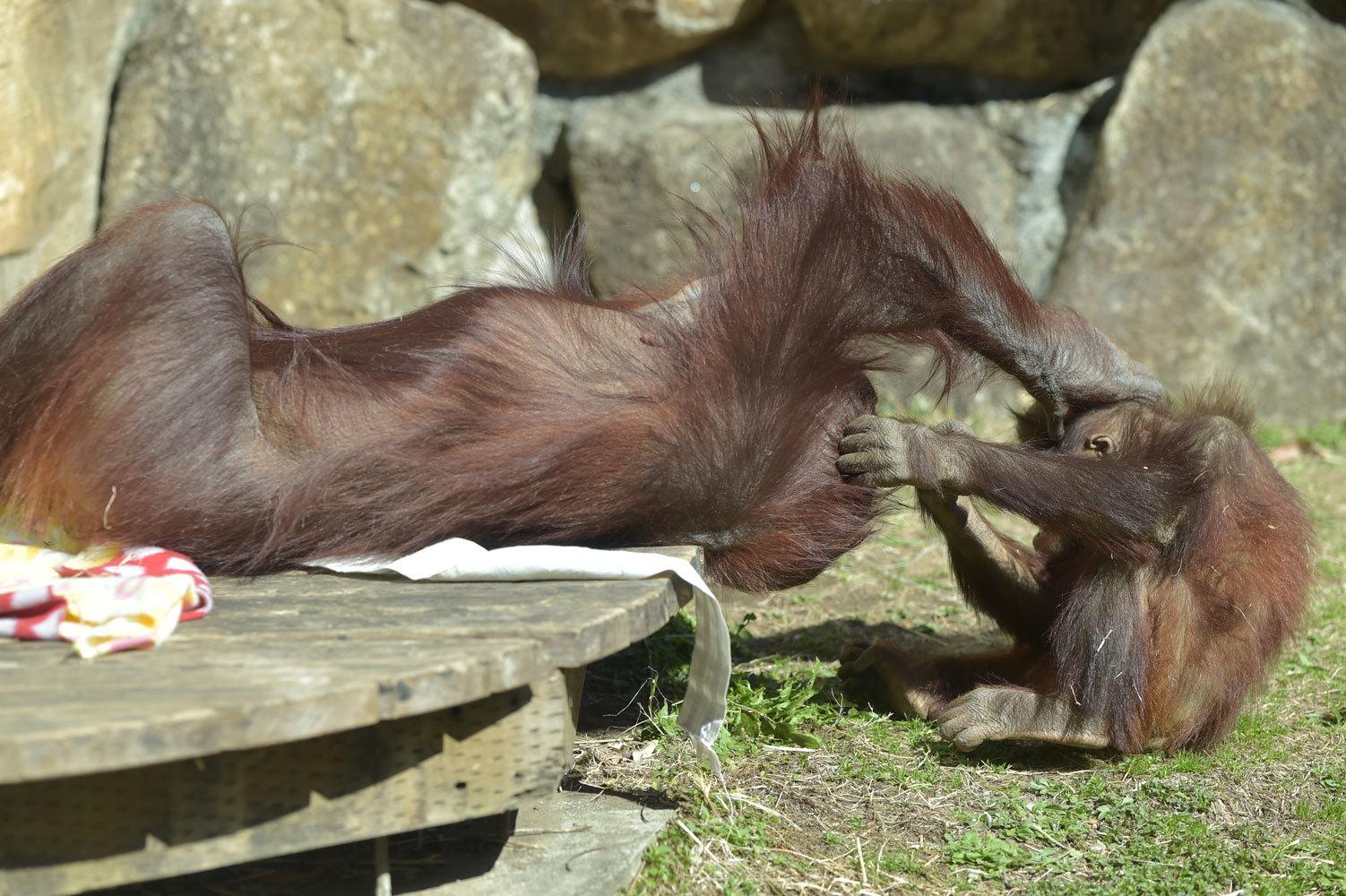 多摩動物園散歩_b0023856_07490431.jpg