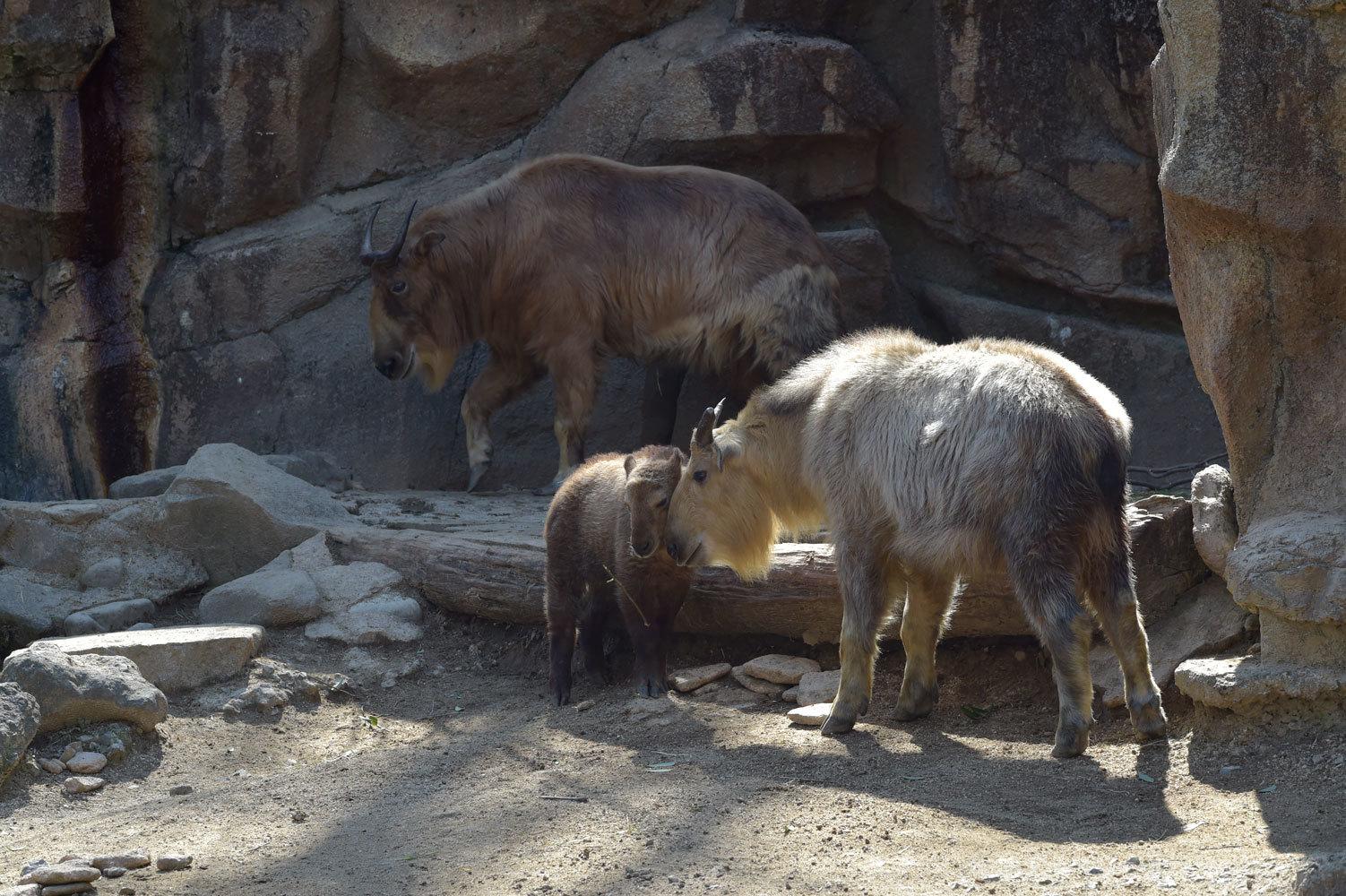 多摩動物園散歩_b0023856_07501592.jpg