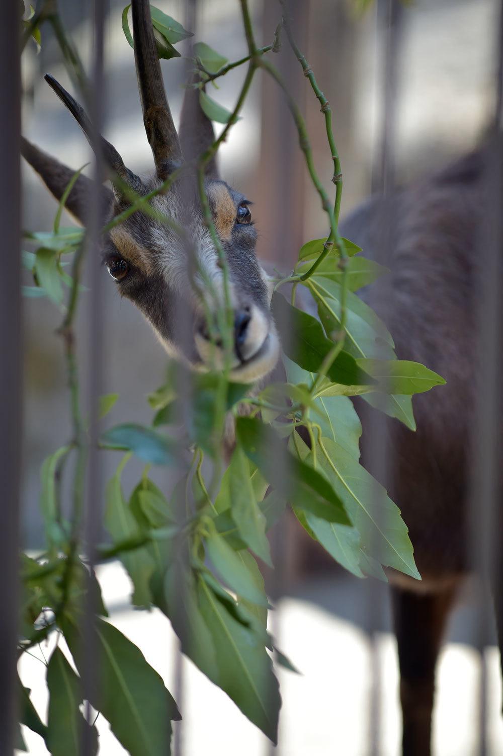 多摩動物園散歩_b0023856_07510257.jpg