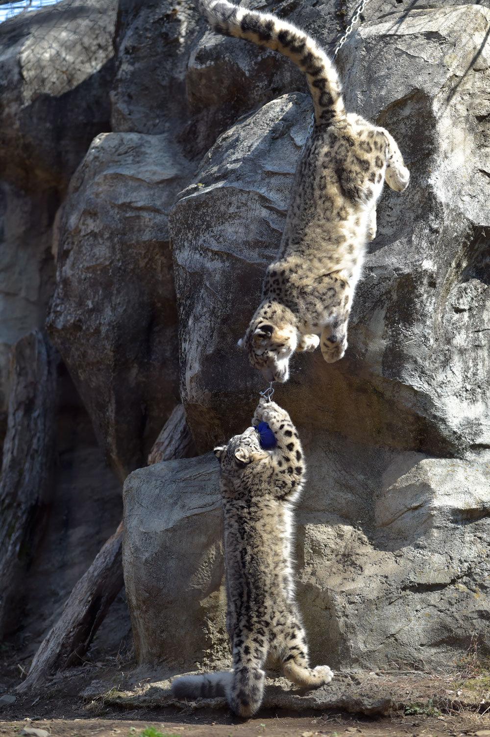多摩動物園散歩_b0023856_07514635.jpg
