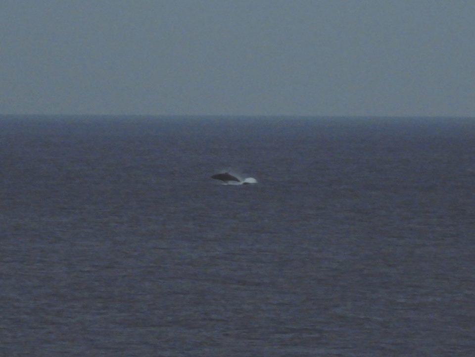 クジラレポートパート2_b0160957_20202219.jpg