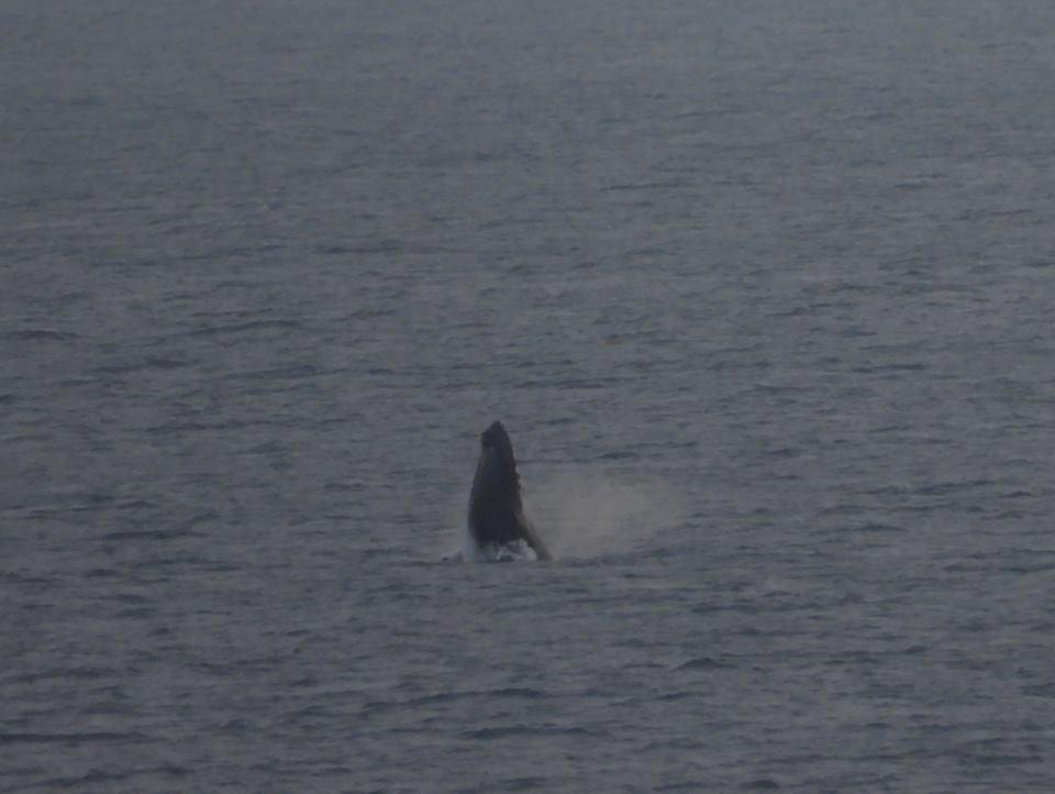 クジラレポートパート2_b0160957_20231993.jpg