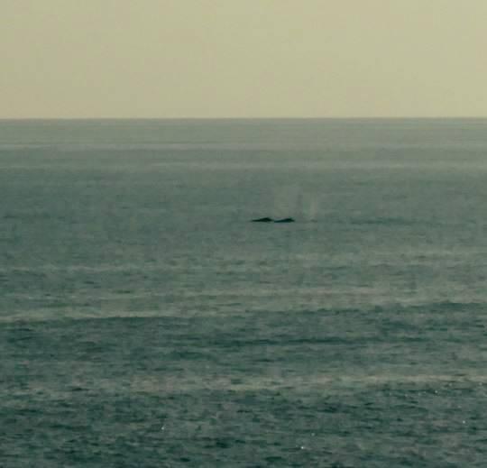 クジラレポートパート2_b0160957_20261205.jpg