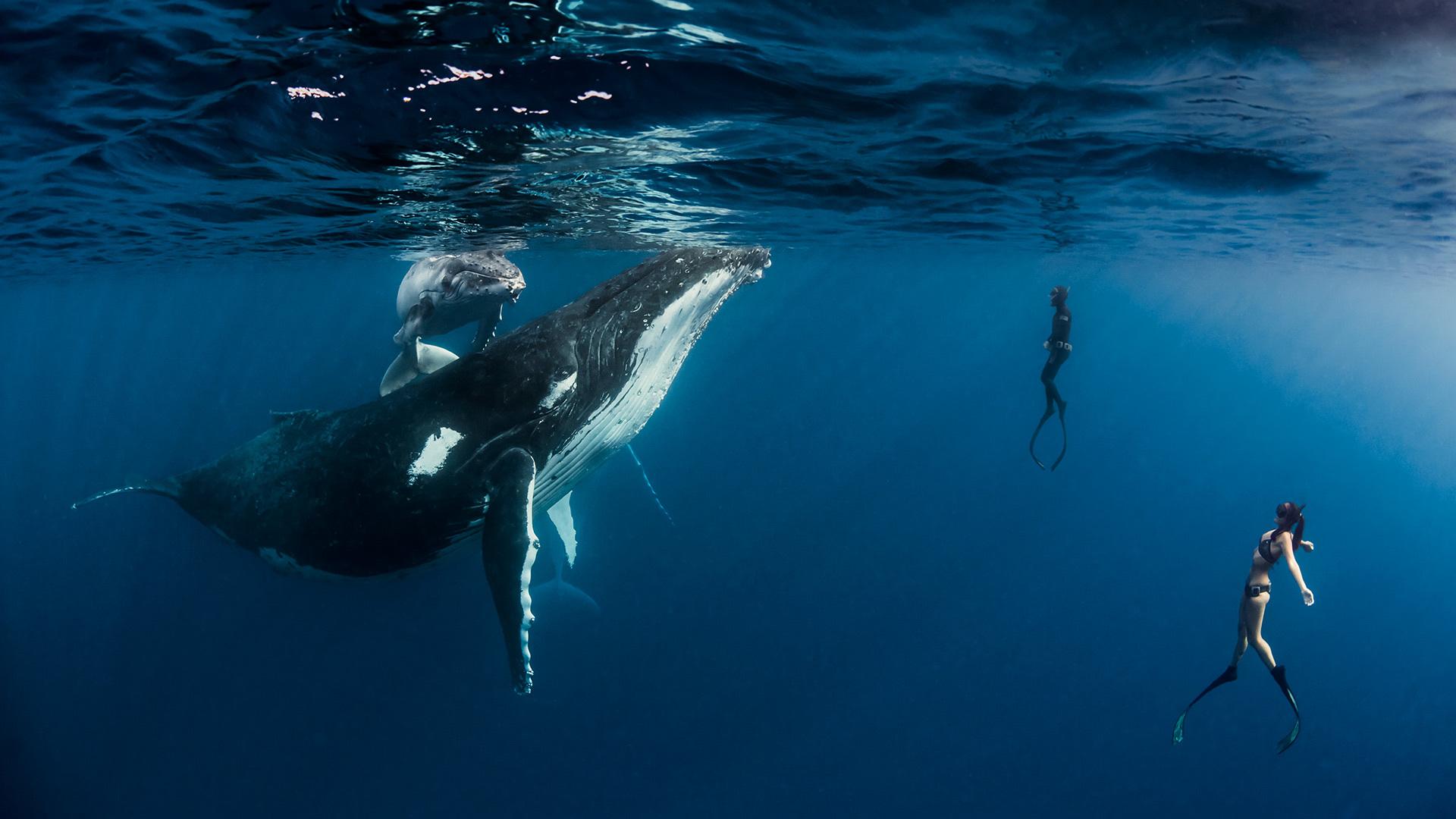 クジラレポートパート2_b0160957_20334059.jpg
