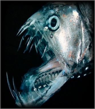 深海魚_e0088462_17553557.jpg