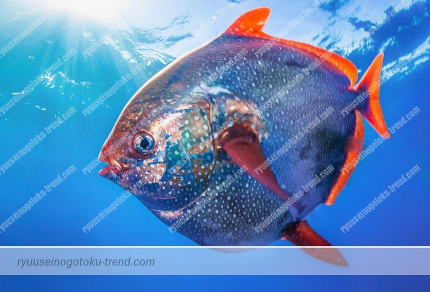 深海魚_e0088462_1756275.jpg
