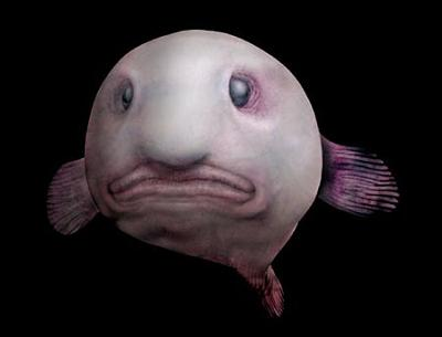 深海魚_e0088462_18135817.jpg