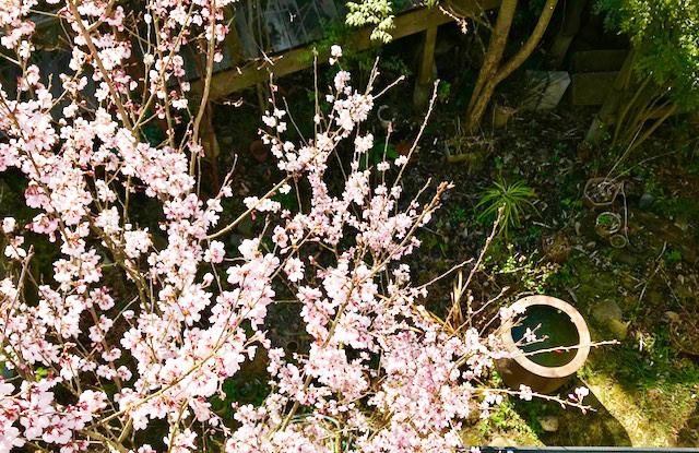 春の宇宙_e0170562_21442549.jpg