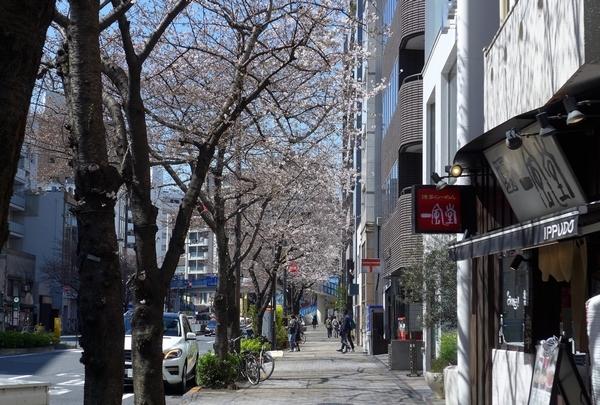 桜へと君はメロスの走り方_a0248481_08055001.jpg