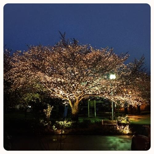 『夜桜カフェ』&『臨時営業』のご案内*_a0322702_23082756.jpeg
