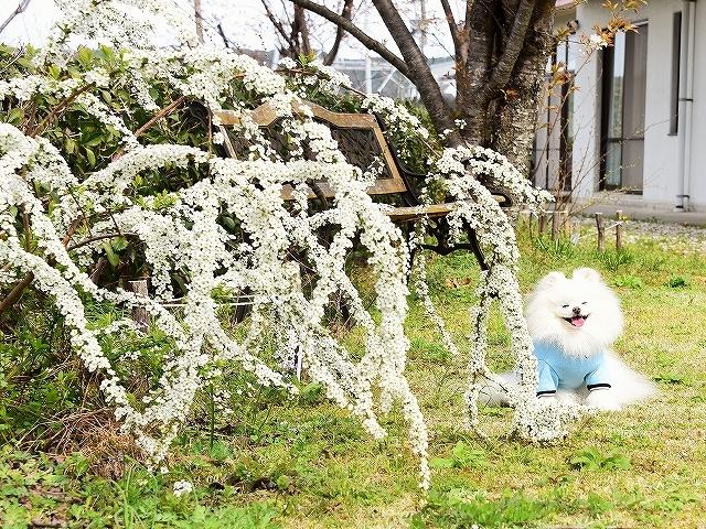 春を愛して_d0360206_02375868.jpg