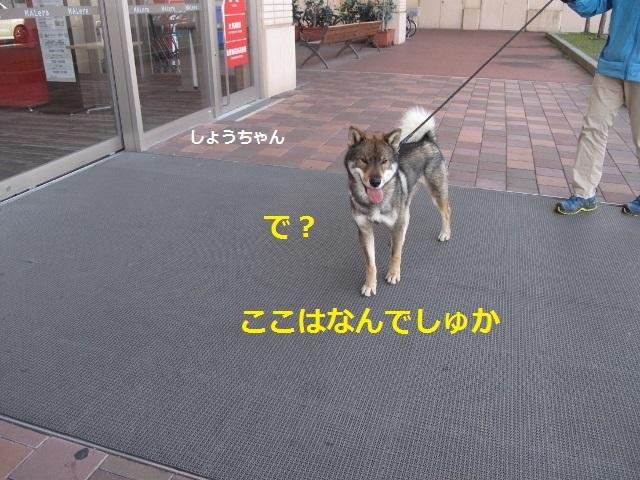 f0143123_10132328.jpg
