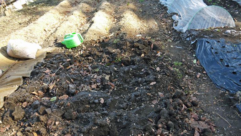 剪定した枝葉のチップがジャガイモの霜害防止3・17_c0014967_945365.jpg