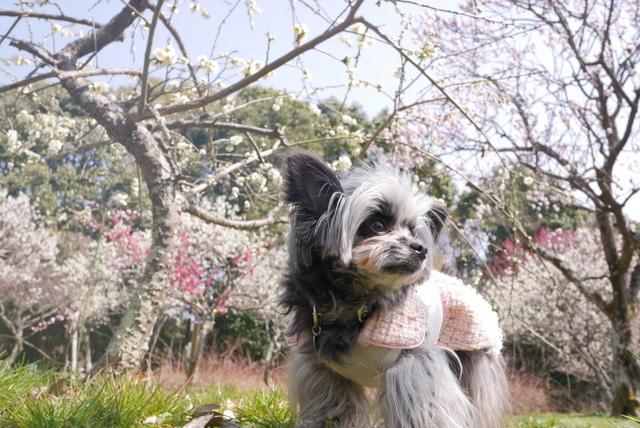 梅見~山田池公園~_b0358575_04332272.jpg