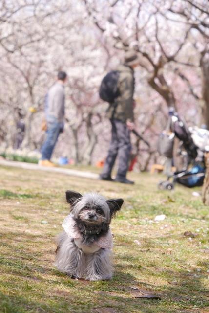 梅見~山田池公園~_b0358575_04332705.jpg