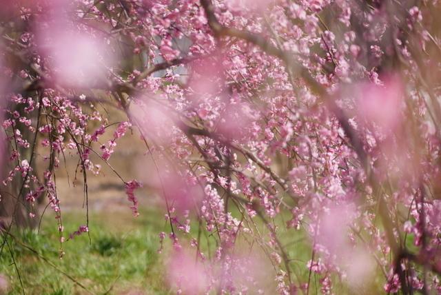 梅見~山田池公園~_b0358575_04543686.jpg