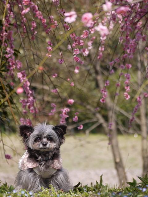 梅見~山田池公園~_b0358575_04573803.jpg