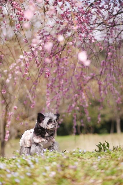 梅見~山田池公園~_b0358575_04580418.jpg